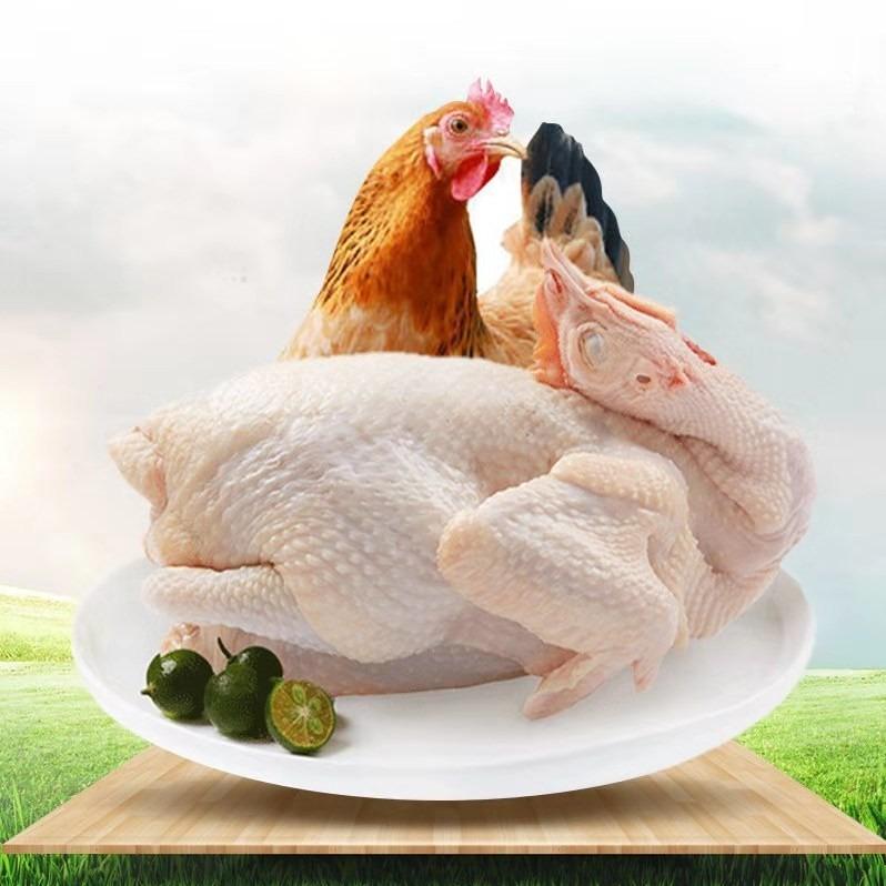 民生惠 · 赤豪 農家散養走地雞