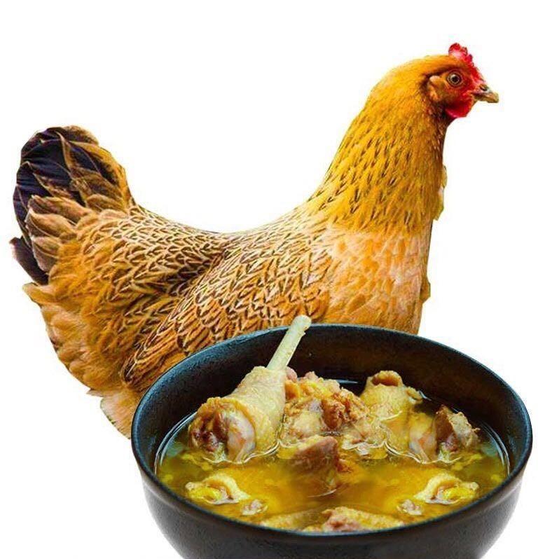 民生惠 ·赤豪 農家散養老母雞